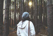 نظاره جنگل در میان انبوه درختان